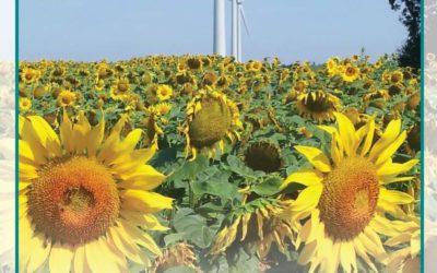 Inauguration du parc éolien d'Ardin